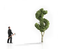 Man with an axe looking at a dollar shaped tree Royalty Free Stock Photos
