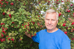 Man on a background of red bush viburnum Stock Image
