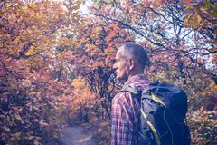 Man with backpack on the background of a colorful autumn leaves. Man with backpack stands in forest on the background of a colorful autumn leaves in a diffuse Stock Images