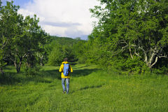 Man with backpack hiking in forest Stock Image