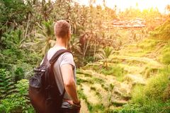 Man with backpack looks on rice terrace view in Bali Royalty Free Stock Photography