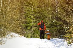 Man with backpack and son stands against the background of coniferous trees in the forest. Winter day. View from the back stock image