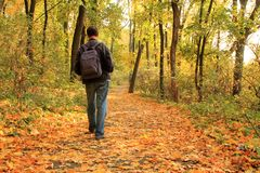 Man walks along autumn forest path strewn with fallen leaves. Royalty Free Stock Photography