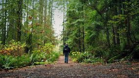 Man With Backpack Walks On Forest Path stock video footage