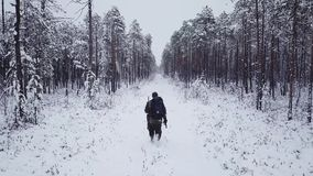 Man with a backpack walks in the forest in winter. Aerial drone flight footage. Backpacking winter hike stock video footage