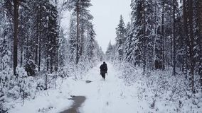 Man with a backpack walks in the forest in winter. Aerial drone flight footage. Backpacking winter hike. Man with a backpack walks in the forest in winter stock video footage