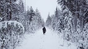 Man with a backpack walks in the forest in winter. Aerial drone flight footage. Backpacking winter hike. Man with a backpack walks in the forest in winter stock footage