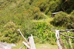Man backpacker tourist hiking jungle forest trail, Bolivia. Stock Image