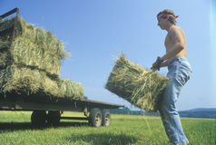 A man bailing hay on a cattle farm Royalty Free Stock Images