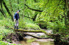 Man balance in forest. Adult middle aged man relaxing in forest. Balance walking through tree Stock Photography