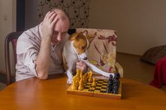 Man with basenji dog thinking on a next move in chess game Stock Photography