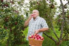 Man with   basket  full of apples Stock Photo