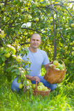 Man with basket of harvested apples Stock Photo