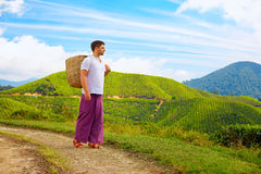 Man with basket walking tea plantation path Stock Photography