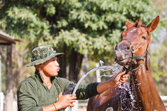Man Bathe horse with horse Stock Photos