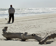 Man on Beach by Petrified Log Stock Photo