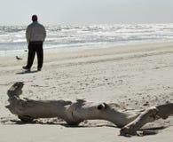 Man on Beach by Petrified Log Stock Photo