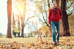 Man with beagle dog walk together in autumn park royalty free stock photo