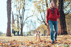 Man with beagle dog walk together in autumn park Stock Photography