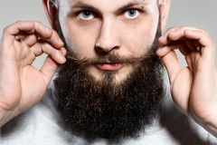 Man with beard adjusting his mustaches. While standing against grey background Stock Photos