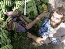 Man with beard and bananas. A hippy looking man harvesting bananas in Thailand Royalty Free Stock Image