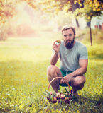 A man with a beard and a basket of apples sitting on the sunny green background, toned Stock Images