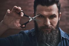 Man with beard. Bearded man is holding scissors and looking seriously at camera, on a wooden background stock photography
