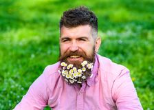 Man with beard on happy face enjoy life in ecologic environment. Eco friendly lifestyle concept. Hipster with daisies. Looks happy. Bearded man with daisy royalty free stock images