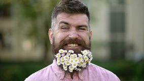 Man with beard on happy face enjoy life in ecologic environment. Eco friendly lifestyle concept. Hipster with daisies. Looks happy. Bearded man with daisy stock footage