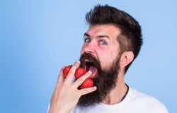 Man beard hipster strawberries fingers blue background. Mostly carbohydrates sucrose fructose glucose. Carbohydrate. Content strawberry. Metabolic disease royalty free stock images