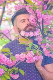 Man with beard and mustache on calm face near pink flowers. Hipster with sakura blossom in beard. Unity with nature. Concept. Bearded man with fresh haircut stock images