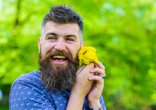 Man with beard and mustache on happy face holds bouquet of dandelions. Romantic hipster made bouquet, green nature Stock Image
