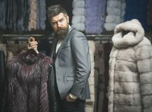 Man with beard and mustache holds fur coat. Winter clothing concept. Guy holds furry coat in shop with fur on background. Macho with stylish appearance with royalty free stock photos