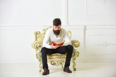 Man with beard and mustache sits on armchair and reading book, white wall background. Scientist, professor on serious. Face explores literature. Knowledge royalty free stock photos