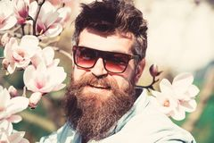 Man with beard and mustache wears sunglasses on sunny day, magnolia flowers on background. Fashion concept. Guy looks. Cool with stylish sunglasses. Hipster royalty free stock photos