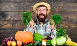 Man with beard proud of his harvest wooden background. Excellent quality harvest. Organic fertilizers make harvest. Healthy and rich. Farmer with homegrown royalty free stock photo