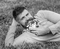 Man with beard on smiling face enjoy nature. Bearded man with daisy flowers lay on meadow, lean on hand, grass. Background. Hipster with daisies in beard looks royalty free stock photography