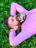 Man with beard on smiling face enjoy nature. Hipster with bouquet of daisies in beard relaxing. Unite with nature. Concept. Bearded man with daisy flowers lay royalty free stock photography