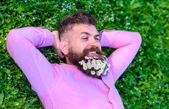 Man with beard on smiling face enjoy nature. Unite with nature concept. Bearded man with daisy flowers lay on grassplot. Grass background. Hipster with bouquet royalty free stock photo