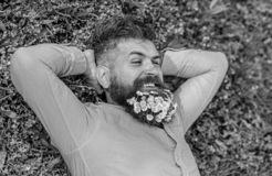 Man with beard on smiling face enjoy nature. Unite with nature concept. Bearded man with daisy flowers lay on grassplot. Grass background. Hipster with bouquet royalty free stock images