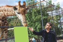 Man with a beard stroking the head of a giraffe royalty free stock images