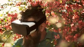 Man with beard wear VR glasses in spring garden. Bearded man explore environment with gadget. Hipster with mobile. Headset at blossoming red tree. Virtual stock video