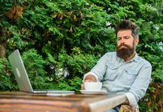 Man bearded hipster make pause for drink coffee and think while sit with laptop. Guy drinks coffee relaxing terrace. Green branches background. Pleasant moment royalty free stock photo