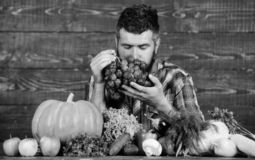 Man bearded holds grapes wooden background. Farmer with homegrown harvest on table. Vegetables organic harvest. Farmer royalty free stock photography
