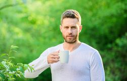 Man bearded tea farmer hold mug nature background. Green tea contains bioactive compounds that improve health. Whole. Leaf tea. Natural drink. Healthy lifestyle stock images