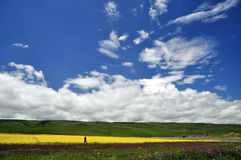 Man and beautiful field. A man is shooting the scenery in the beautiful field where are full of kinds of  flowers Stock Images