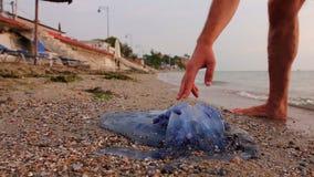 Man been met spataders onderzoekt groot, blauw, doden, kwallen in ondiep zeewater stock footage