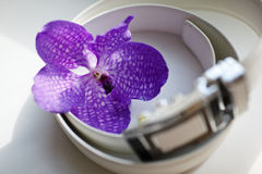 Man Belt  with orchid Stock Photos