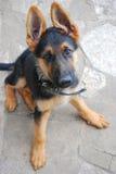 Man beste vriend, huisdier, grappige hond, slim dier, Stock Foto