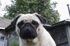 Man beste vriend, huisdier, grappige hond, slim dier, Royalty-vrije Stock Afbeeldingen